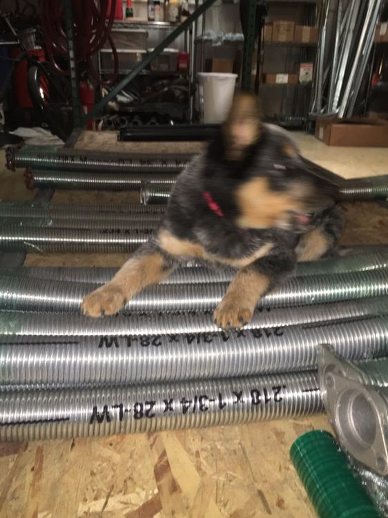 Our Puppy In The Shop Cityscape Garage Doors Garage